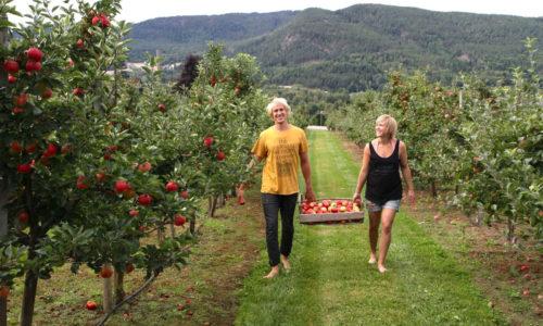 Lindheim Frukt og Lindheim Ølkompani