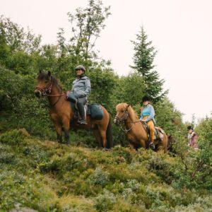 God stemningmed stødige hester og nydelig natur.